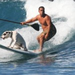 Hawaiis Surfhund