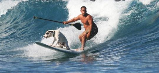 """""""Mana"""" der hawaiianische SUP-Surfhund"""