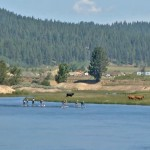 payette-river-games-2014-river-sup-race