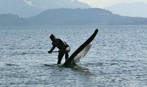 Muss ein aufblasbares Surfbrett wie ein Hardboard aussehen